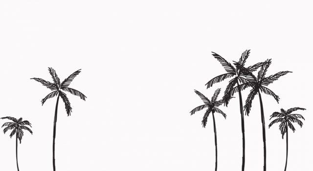palm-trees-palm-tree-club-header-1