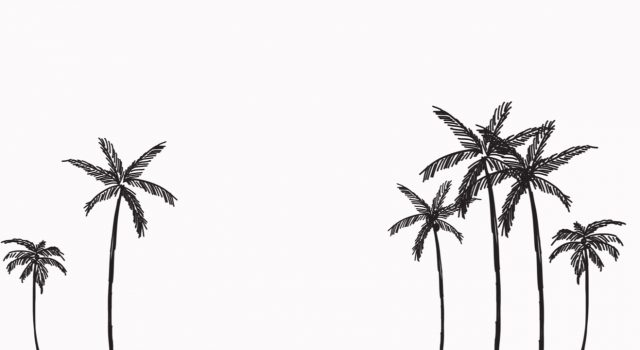 palm-trees-palm-tree-club-header-1